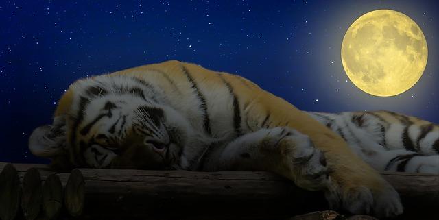 tiger-1644771_640